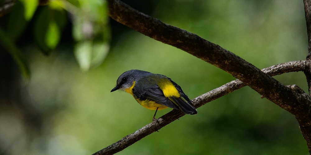 Bird_OPT