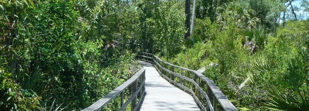 boardwalk through Corkscrew Swamp