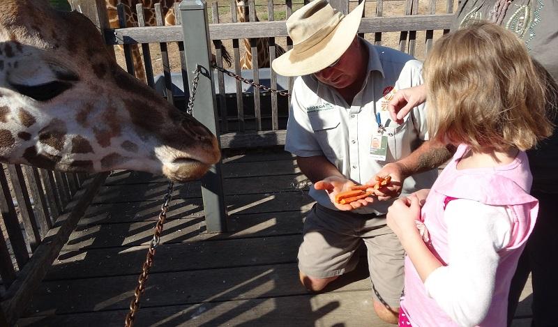 Taronga Western Plains Zoo giraffe feeding_blog