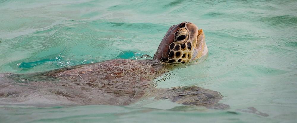 Turtle_3