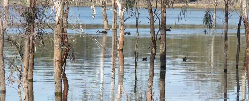 Birds of Hattah Lakes