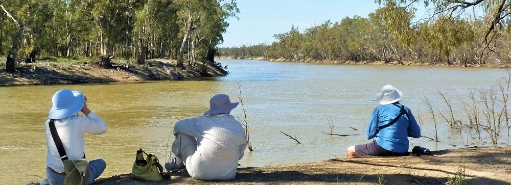 Murray River birdwatching