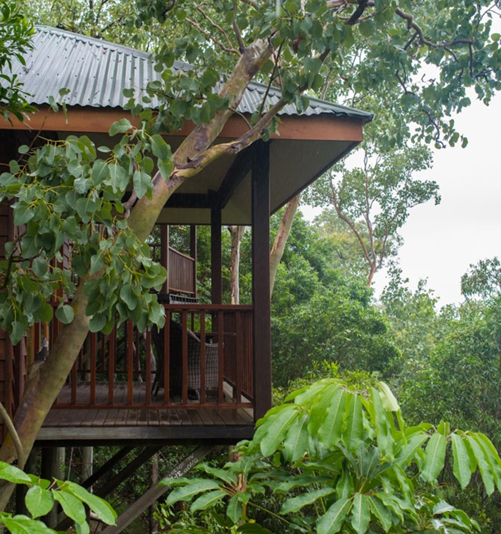 eco retreat Thala Beach treetop bungalow