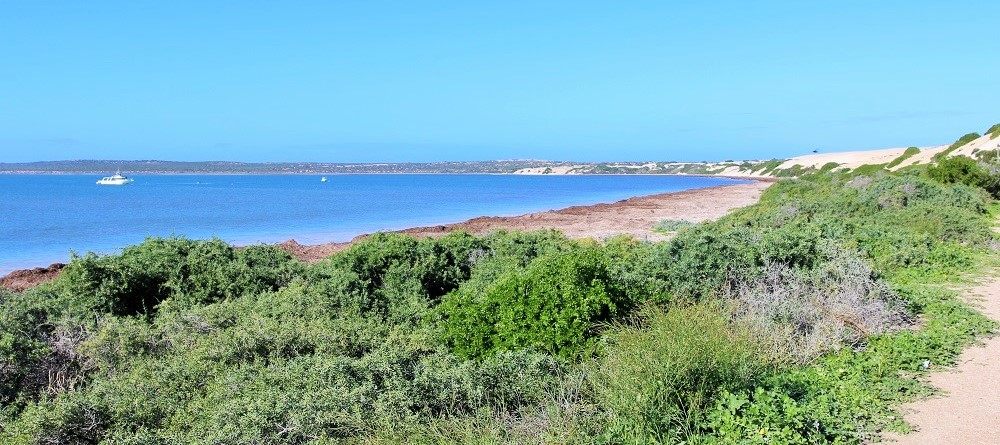 whale-watching-in-pristine-fowlers-bay