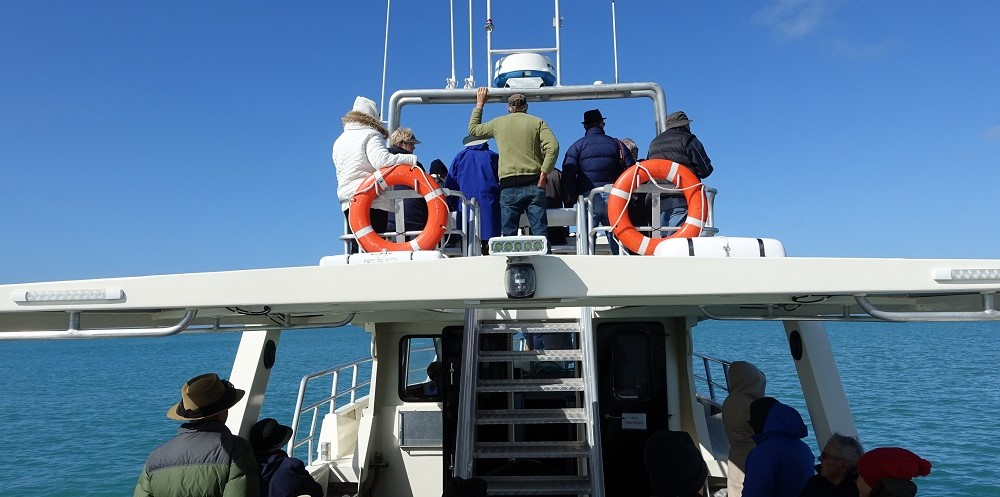 whale-watching-on-the-asherah