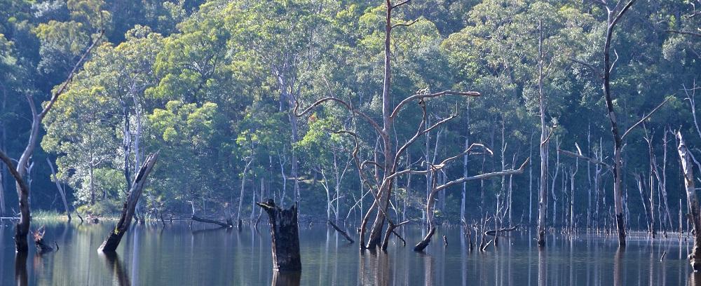 Sunken Forest - Wild Canoe Experience (2)