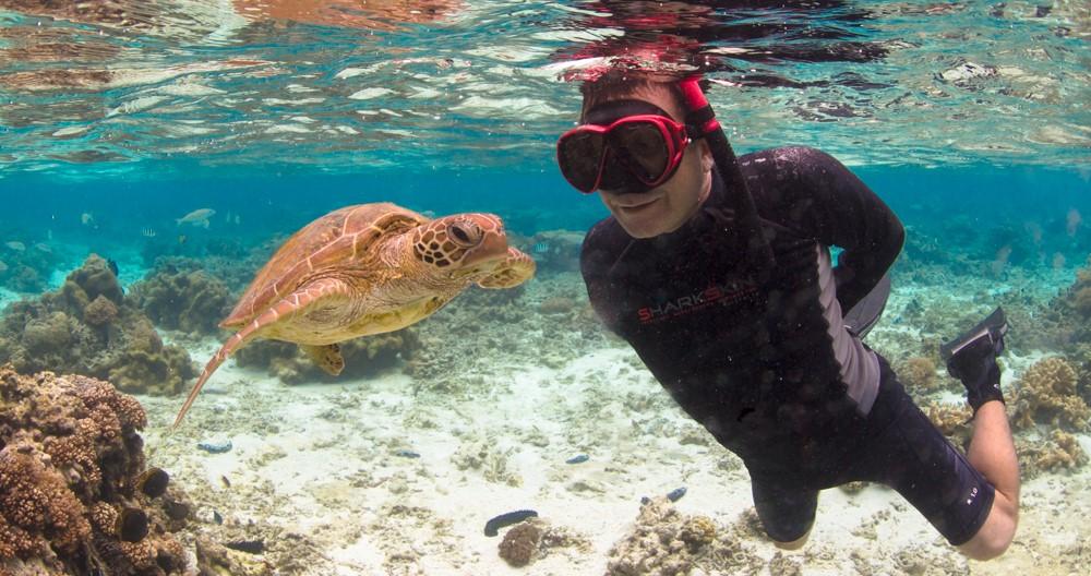 snorkelling Lady Elliott Island 3 (2)