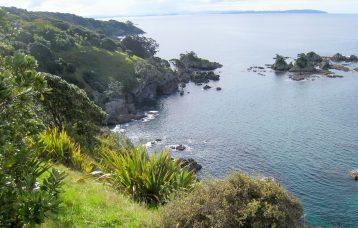 Tiritiri Matangi Island New Zealand