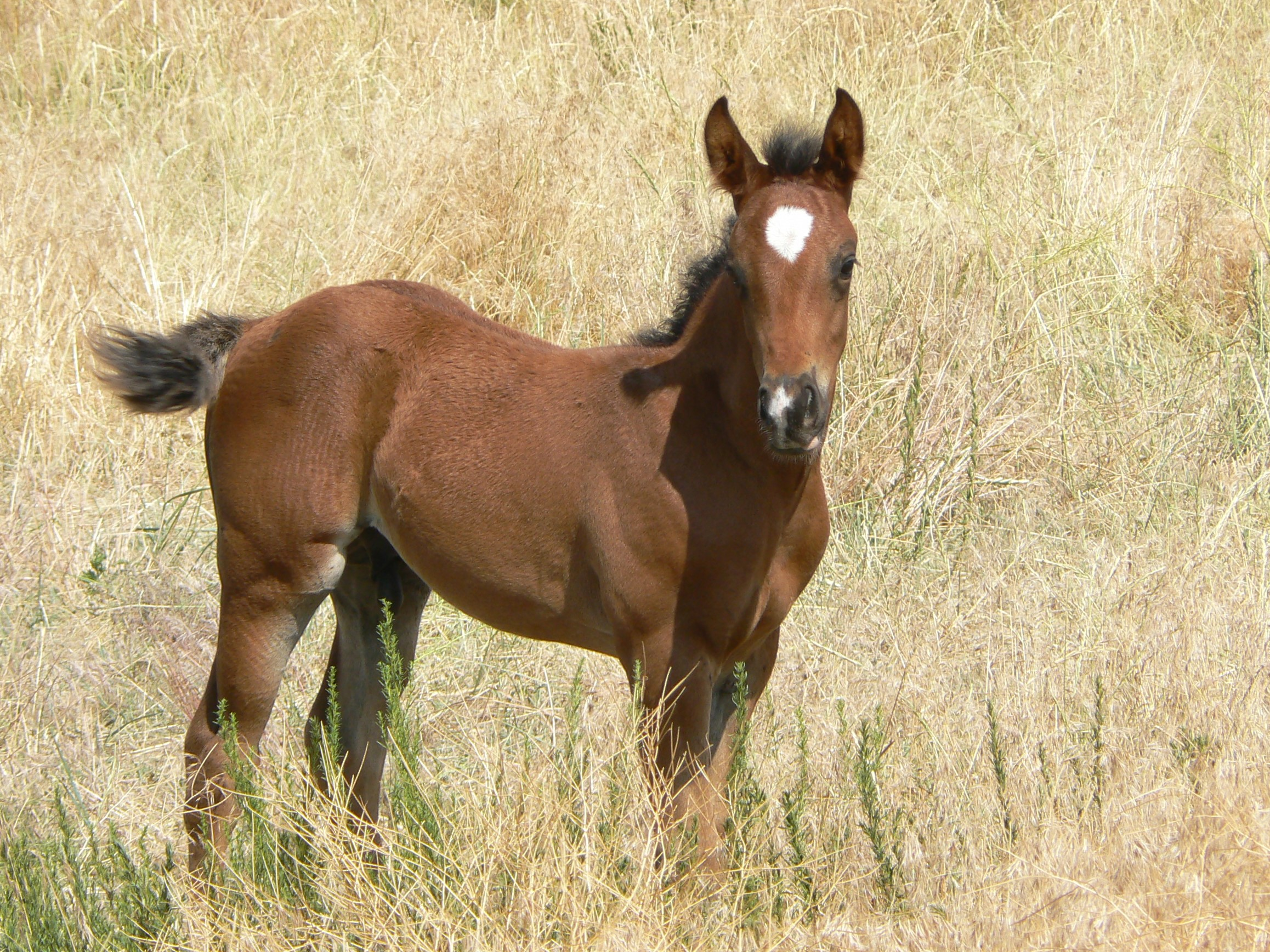 Foal at Black Hills Wild Horse Sanctuary