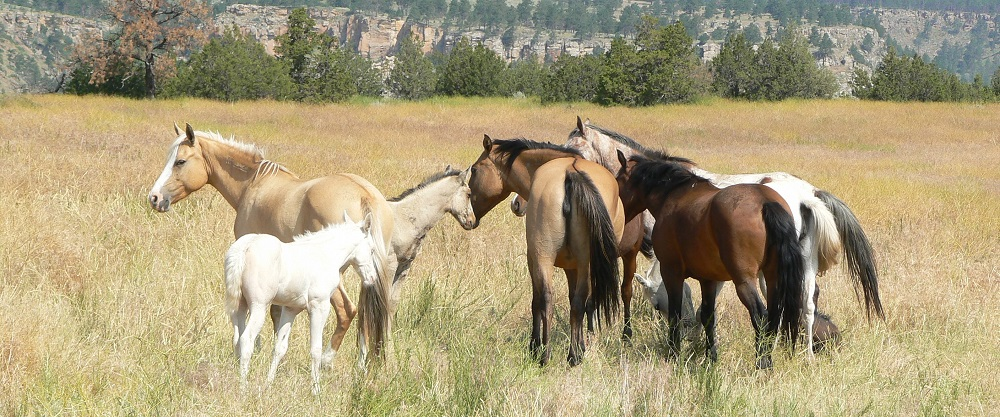 herd at Black Hills Wild Horse Sanctuary